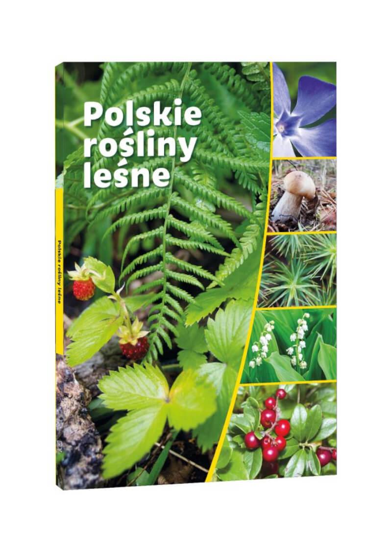 Polskie rośliny leśne
